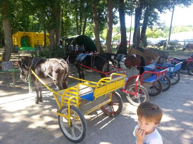 la mignardiere poneys